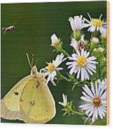 Buzzed Butterfly Wood Print