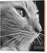 Bw Kitty Wood Print