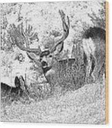 Bw Mule Deer Wood Print