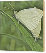 Cabbage White Butterflies 5267 Wood Print