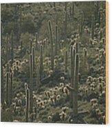 Cacti Near Tucson, Arizona Wood Print