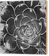 Cactus 10 Bw Wood Print