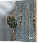 Cactus 17 Wood Print