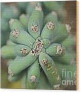 Cactus 25 Wood Print
