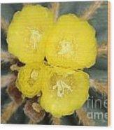 Cactus 37 Wood Print