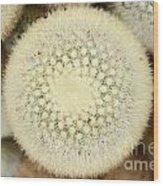 Cactus 44 Wood Print
