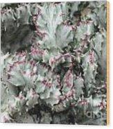 Cactus 58 Wood Print