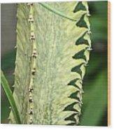 Cactus 60 Wood Print