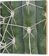 Cactus 61 Wood Print