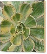 Cactus 63 Wood Print