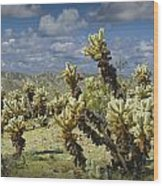 Cactus Also Called Teddy Bear Cholla Wood Print