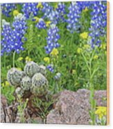 Cactus And Bluebonnets 2am-28694 Wood Print