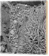 Cactus And Rocks Wood Print
