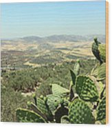 Cactus At Samaria Wood Print