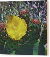 Cactus Blossom 8 Wood Print