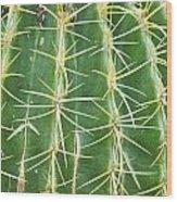 Cactus Close Trouble Wood Print