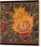 Cactus Flower 3 Wood Print
