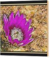 Cactus Flower 4 Wood Print