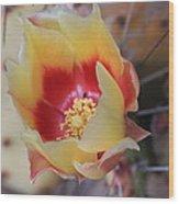 Cactus Flower Art In My Garden Wood Print