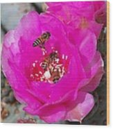 Cactus Flower Buzz Wood Print