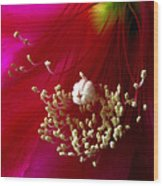 Cactus Flower Interior Wood Print