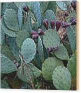 Cactus Plants Wood Print
