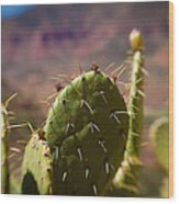 Cactus With A View Wood Print
