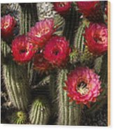 Cactus With Red Flowers Wood Print