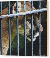 Caged Beauty Wood Print