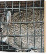 Caged Rabbit Wood Print