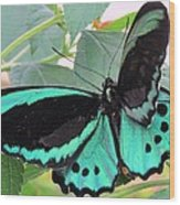 Butterfly Of Many Colors Wood Print