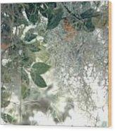 Calamondon And Moss Wood Print