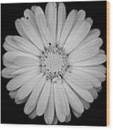 Calendula Flower - Black And White Wood Print