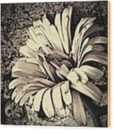 Calendula In Browns Wood Print