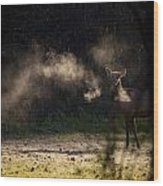 Calf Elk With Steaming Breath At Lost Valley Wood Print