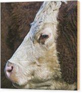Calf Portrait Wood Print