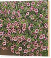 Calibrachoa Calibrachoa Sp Noa Peach Wood Print