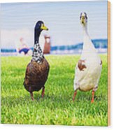 Calico Duck Quartet Wood Print by Vicki Jauron