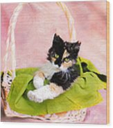 Calico Kitty In Basket Wood Print