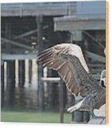 California Brown Pelicans 2 Wood Print