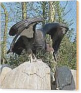 California Condor Wood Print