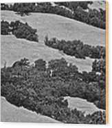 California Hillside Oaks Wood Print