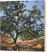 California Oaks Wood Print