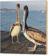 California Pelicans Wood Print