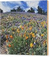 California Poppies And Lupins On A Hill Wood Print