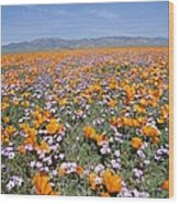 California Poppies And Other Wood Print