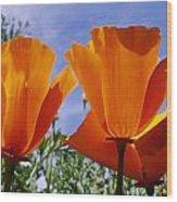 California Poppies Eschscholtzia Wood Print