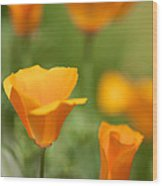 California Poppy Cluster Wood Print