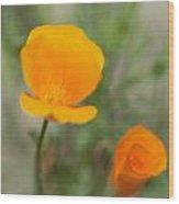 California Poppy Flowers Wood Print