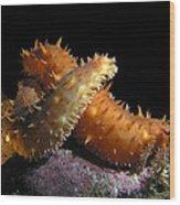 California Sea Cucumber Love Wood Print